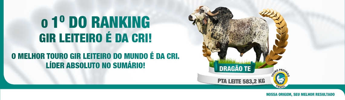 Dragão 1° do Ranking